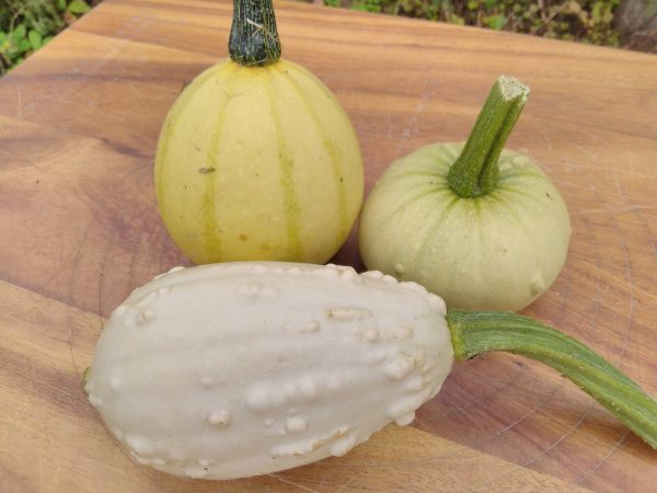 gourd examples
