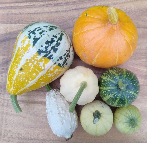 7 ornamental gourds
