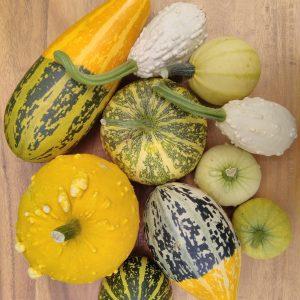 10 Gourd Colleection
